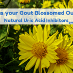 Has Your Gout Blossomed Out?