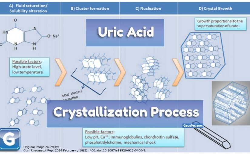 Uric Acid Crystallization Formation and Growth Processes